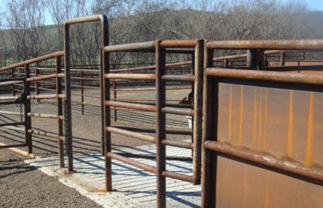Cattle Squeeze Chute Coast Pipe